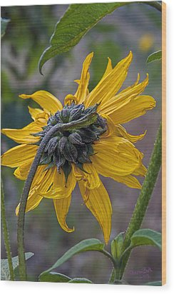 Wood Print featuring the digital art Sunflower by Sharon Beth