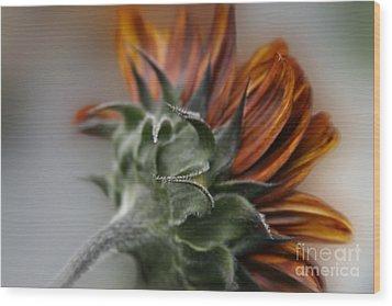 Sunflower Wood Print by Sharon Mau