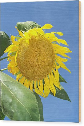 Sunflower Sky Wood Print by Noreen HaCohen