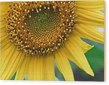 Sunflower Smiles Wood Print