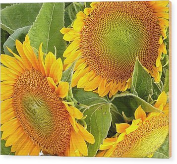 Sunflower Smiles Wood Print by Kim Bemis