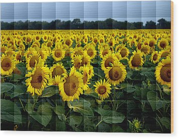 Sunflower Squared Wood Print