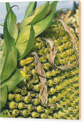 Wood Print featuring the photograph Sunflower Study by Geri Glavis