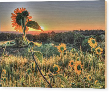 Sunflower Sunrise 1 Wood Print by Diane Alexander