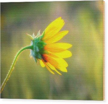Sunflower Sunrise 6 Wood Print by Diane Alexander