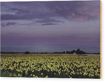 Wood Print featuring the photograph Sunflower Sunrise by Kristal Kraft
