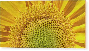Wood Print featuring the photograph Sunflower Sunrise by Michael Dohnalek