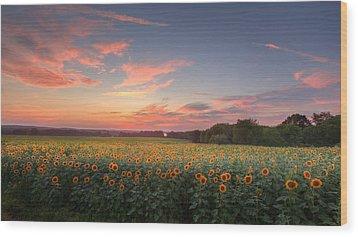 Sunflower Sunset Wood Print by Bill Wakeley