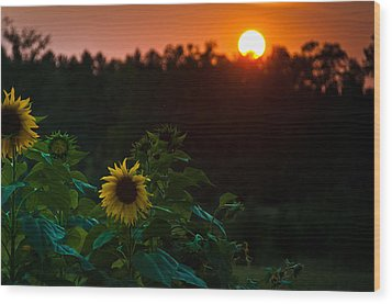 Sunflower Sunset Wood Print by Cheryl Baxter