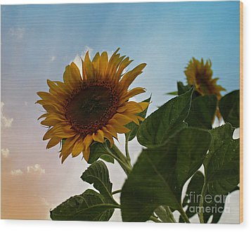 Sunflower Sunset Wood Print by Michelle Wolff
