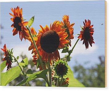 Sunflower Symphony Wood Print by Karen Wiles