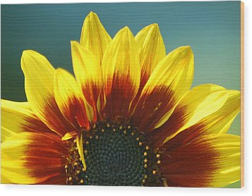 Wood Print featuring the photograph Sunflower by Tam Ryan