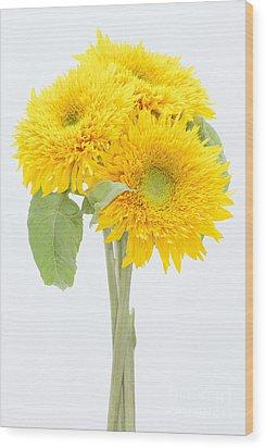 Sunflower Trio Wood Print by Anne Gilbert