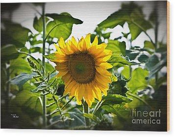 Sunflower Vignette Edges Wood Print by Ms Judi