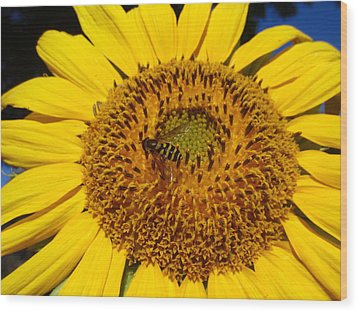 Sunflower Visitor Series 1 Wood Print