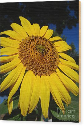 Sunflower Visitor Series 3 Wood Print