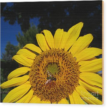 Sunflower Visitor Series 4 Wood Print