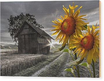 Sunflower Watch Wood Print by Debra and Dave Vanderlaan