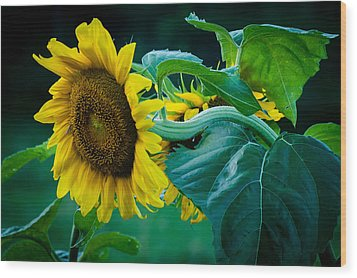 Wood Print featuring the photograph Sunflower by Wayne Meyer