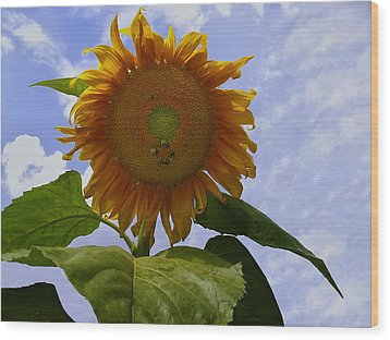 Sunflower With Busy Bees Wood Print by Chris Flees