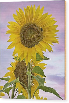 Sunflower With Colorful Evening Sky Wood Print