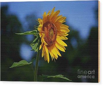 Sunflower With Honeybee Wood Print by Catherine Sherman
