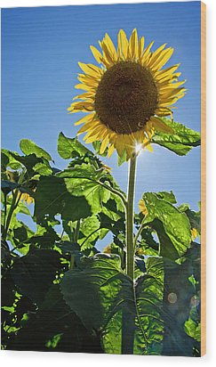 Sunflower With Sun Wood Print by Donna Doherty