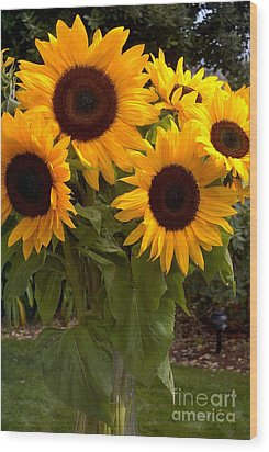 Wood Print featuring the photograph Sunflowers by Arlene Carmel