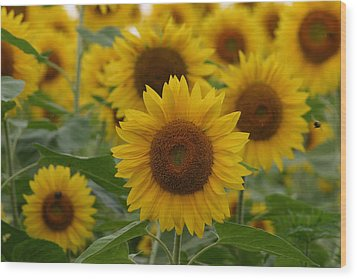 Sunflowers At The Farm Wood Print by Denyse Duhaime