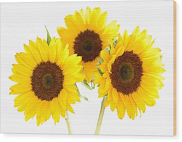 Sunflowers Wood Print by Claudio Bacinello