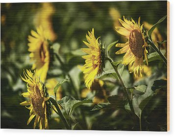 Wood Print featuring the photograph Sunflowers In The Wind by Steven Sparks