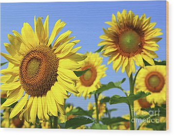 Sunflowers In Field Wood Print by Elena Elisseeva