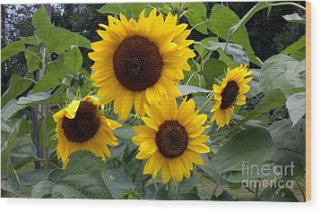 Sunflowers Wood Print by Polly Anna