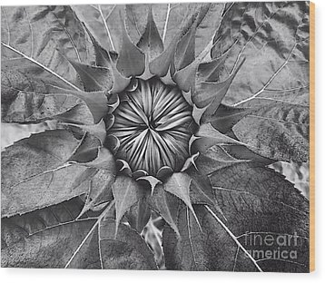 Sunflower's Shades Of Grey Wood Print