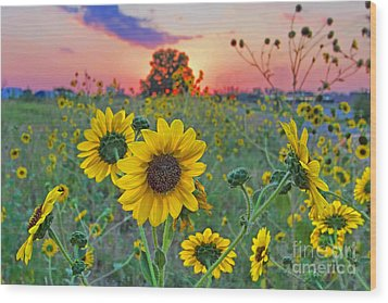 Sunflowers Sunset Wood Print