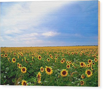 Sunflowers Wood Print by Thomas Leon