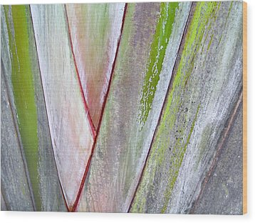 Sunken Gardens Abstract 4 Wood Print by Maria Huntley