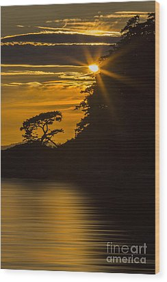 Sunkissed Wood Print by Sonya Lang