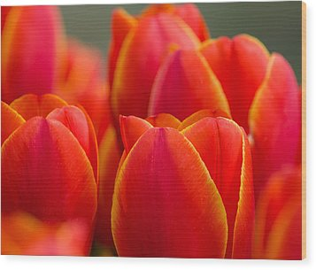 Sunkissed Tulips Wood Print by Jordan Blackstone
