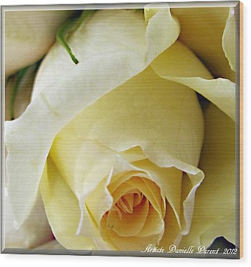 Sunkissed Yellow Rose Wood Print by Danielle  Parent