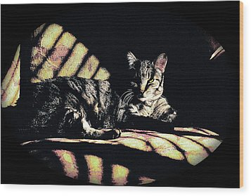 Sunlight And Whiskers Wood Print by Ronald Hurst