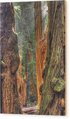 Sunlight Beams Into The Grove Muir Woods National Monument Late Winter Early Afternoon Wood Print by Michael Mazaika