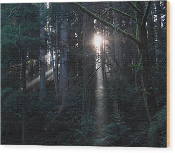 Sunlight In The Forest Wood Print by Karen Molenaar Terrell