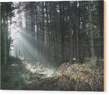 Wood Print featuring the photograph Sunlight On Cannock Chase by Jean Walker