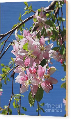Sunlight On Spring Blossoms Wood Print by Carol Groenen