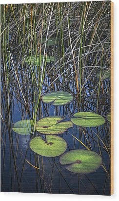 Sunlight On The Lilypads Wood Print by Debra and Dave Vanderlaan
