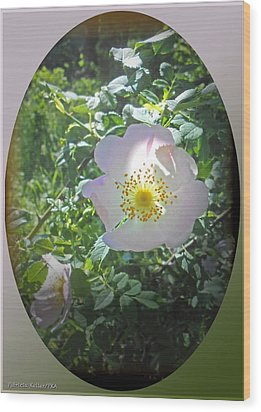 Sunlight On The Wild Pink Rose Wood Print by Patricia Keller