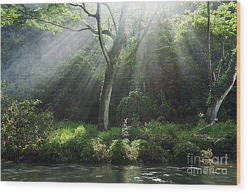 Sunlight Rays Through Trees Wood Print by M Swiet Productions