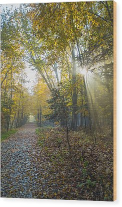 Sunlight Streaming Through The Trees Wood Print by Jacques Laurent