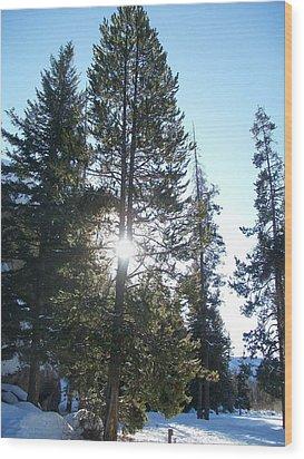 Sunlight Through A Tree Wood Print by Jewel Hengen
